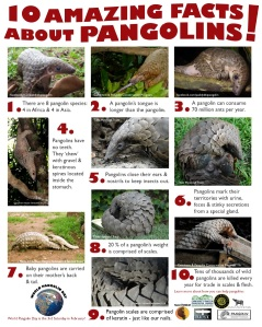 facts about pangolins