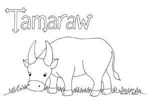 tamaraw