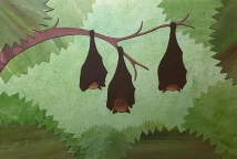 Golden-capped fruit bat collage