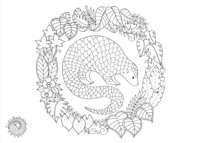 pangolin-colouring-2017-v2