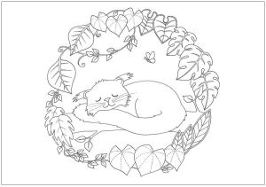 Bearcat colouring page