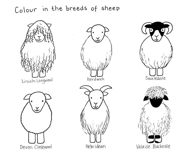 Sheep colouring page