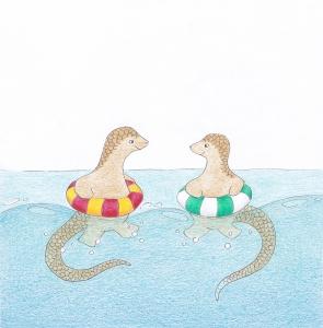 Swimming with a Sunda pangolin