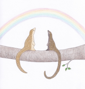 Watching rainbows with black bellied pangolin